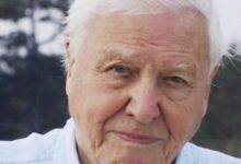 Photo of David Attenborough a rejoint Instagram. Quatre heures plus tard, il avait 1 million de followers