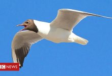 Photo of Seagull fait tomber un drone sur Stranraer Academy